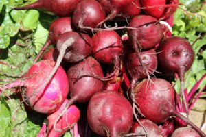 beets-1368370_1280